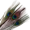 Peacock Feathers 25-30in 100pcs/bag Multi